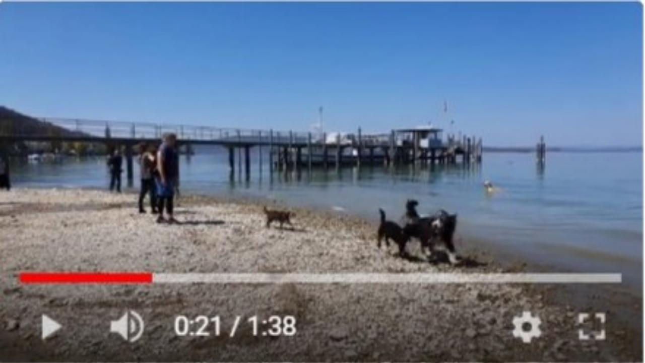 Video Bodensee Miniaturbild