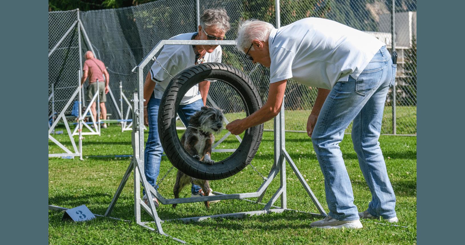 Hundereise Disentis Übungen mit Hund