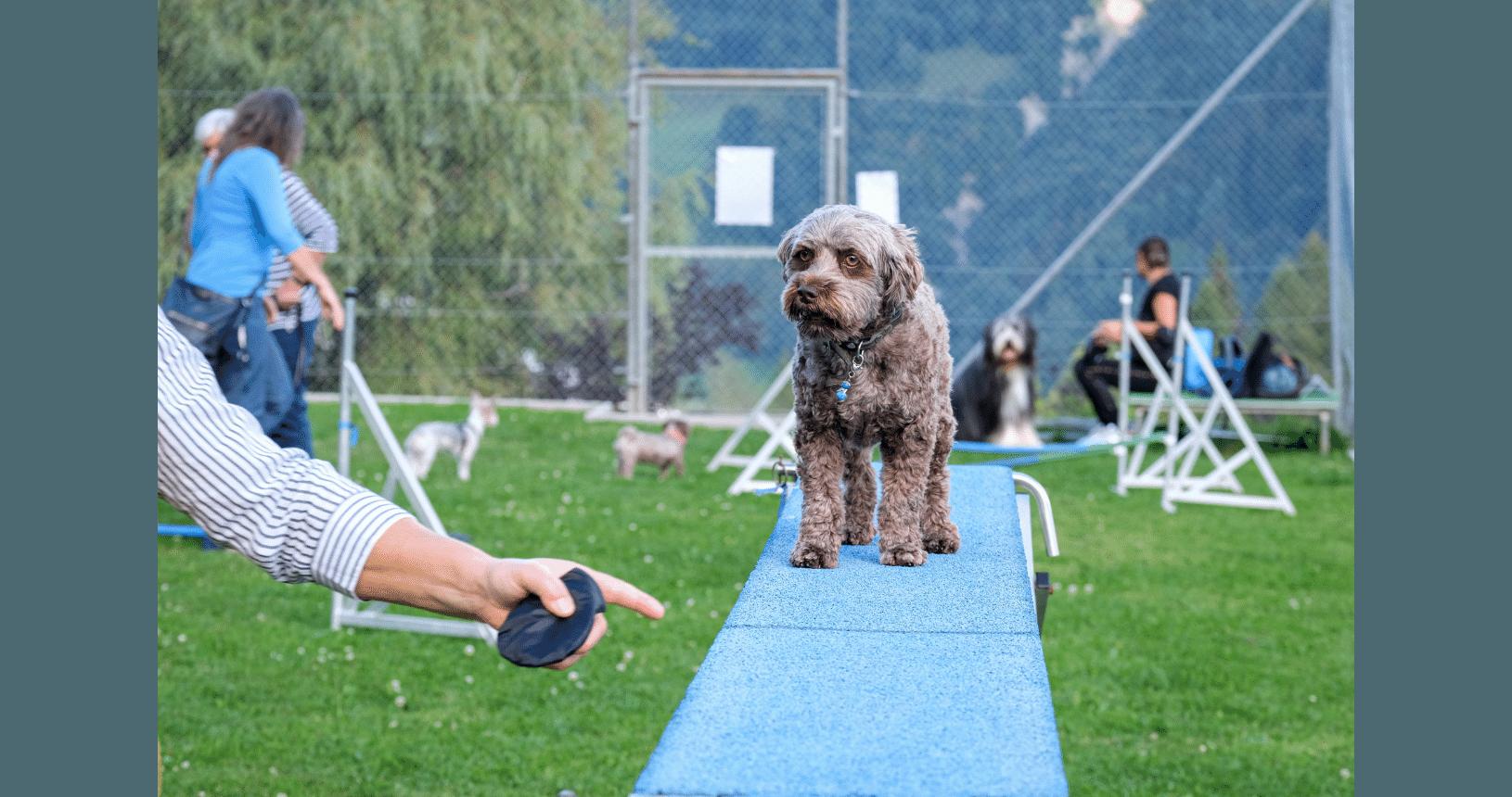 Hundereise Disentis Übungen mit Hund 2