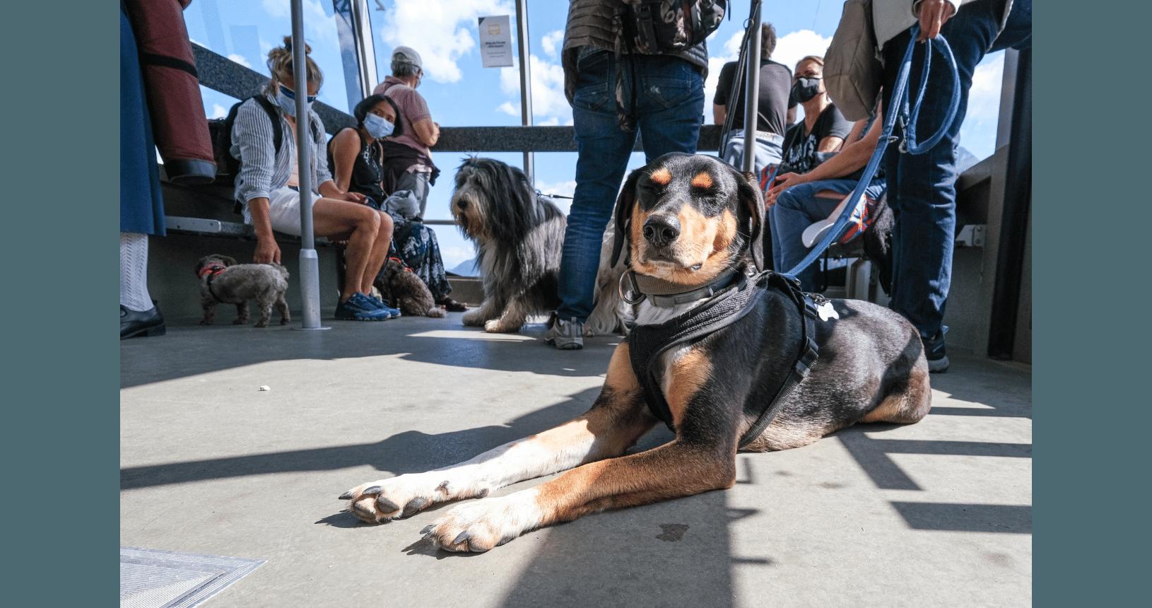 Hundereise Disentis Gondelfahrt mit dem Hund