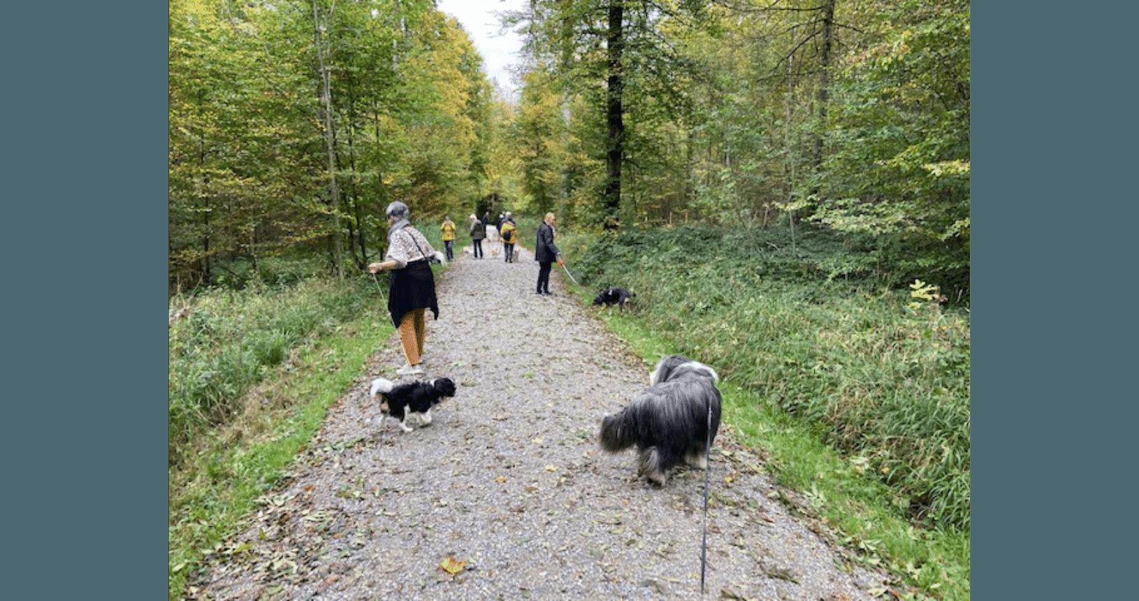Hundereise Zürich Herbst Spaziergang