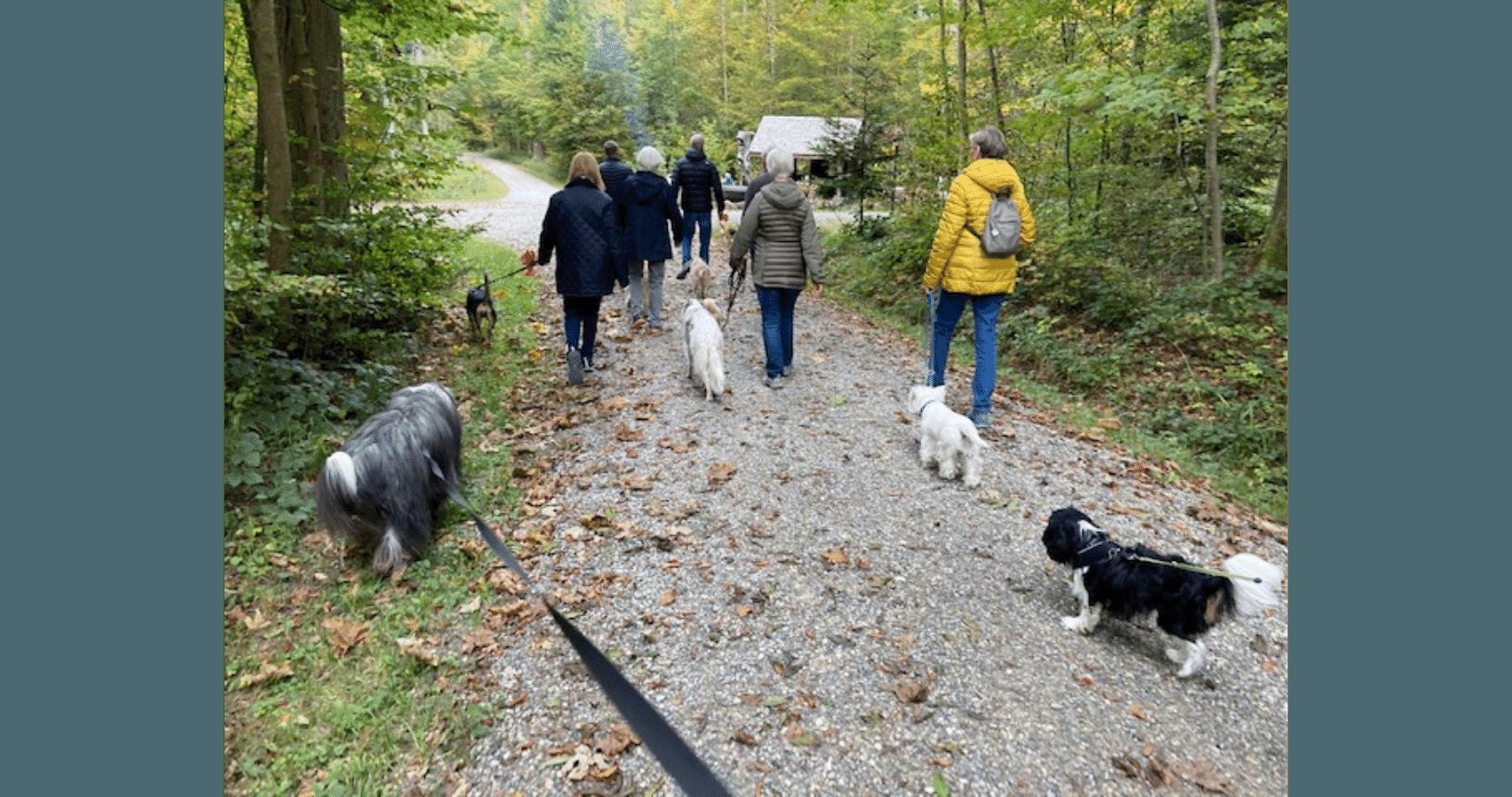 Hundereise Zürich Herbst Spaziergang 2