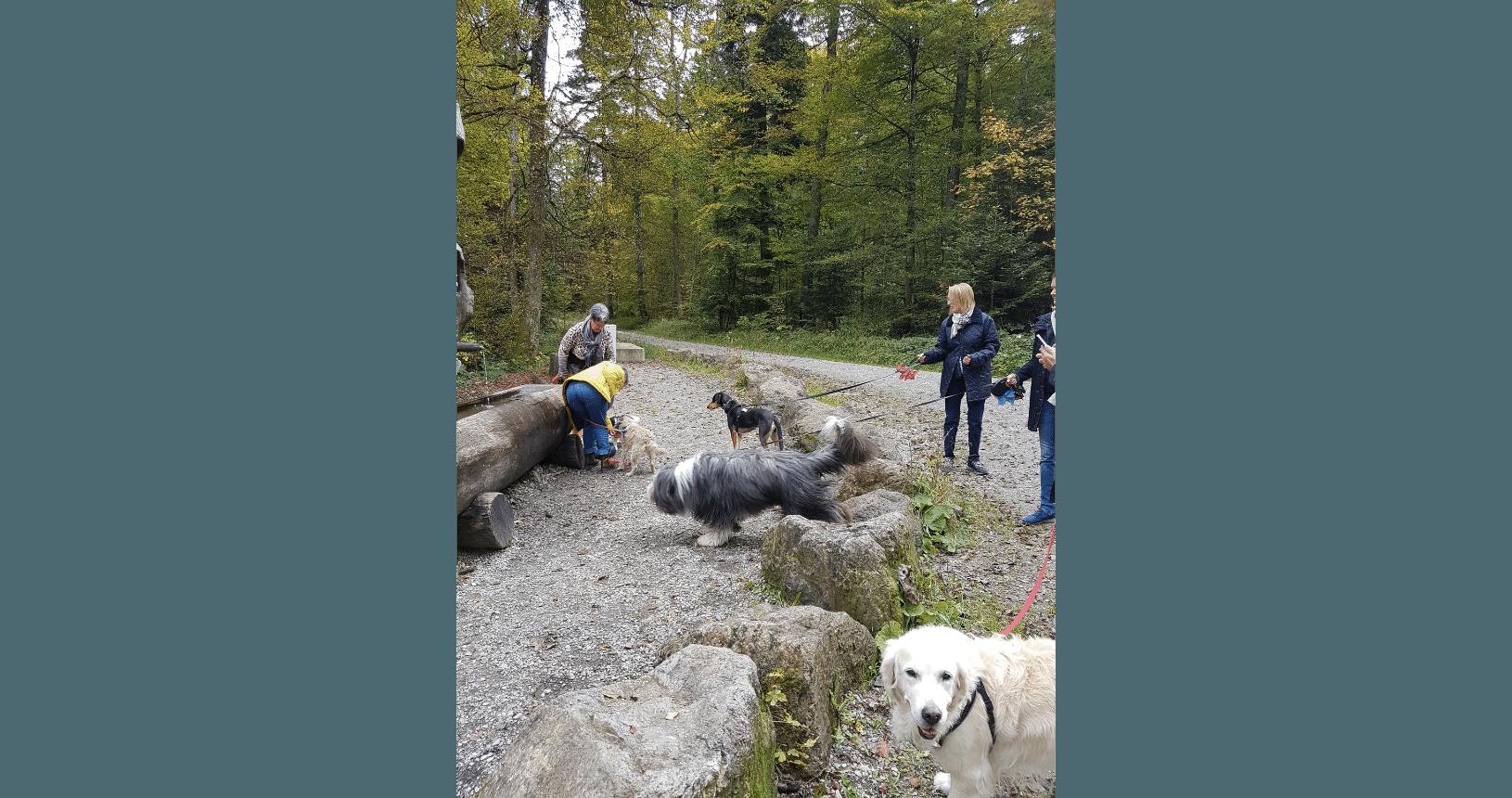 Hundereise Zürich Spaziergang 4
